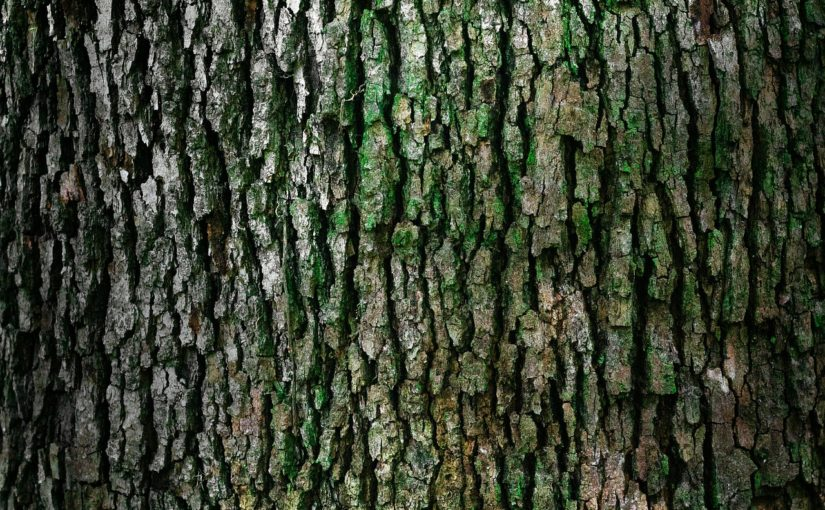 Prześliczny i {czysty zieleniec to nie lada wyzwanie, szczególnie jak jego pielęgnacją zajmujemy się sami.